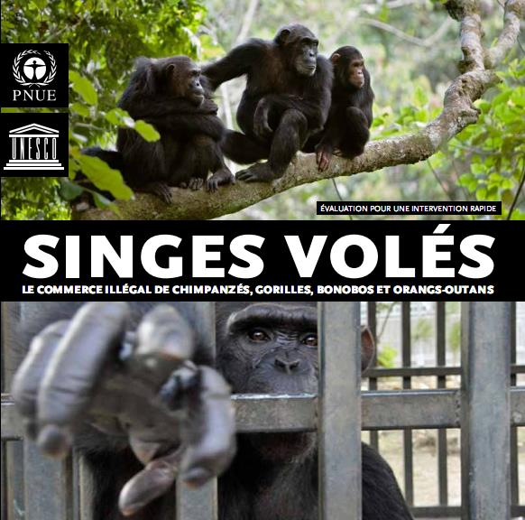 Stolen Apes – The Illicit trade in chimpanzees, gorillas, bonos and orangutans